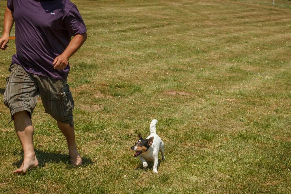 Tag_des_Hundes_2015-023
