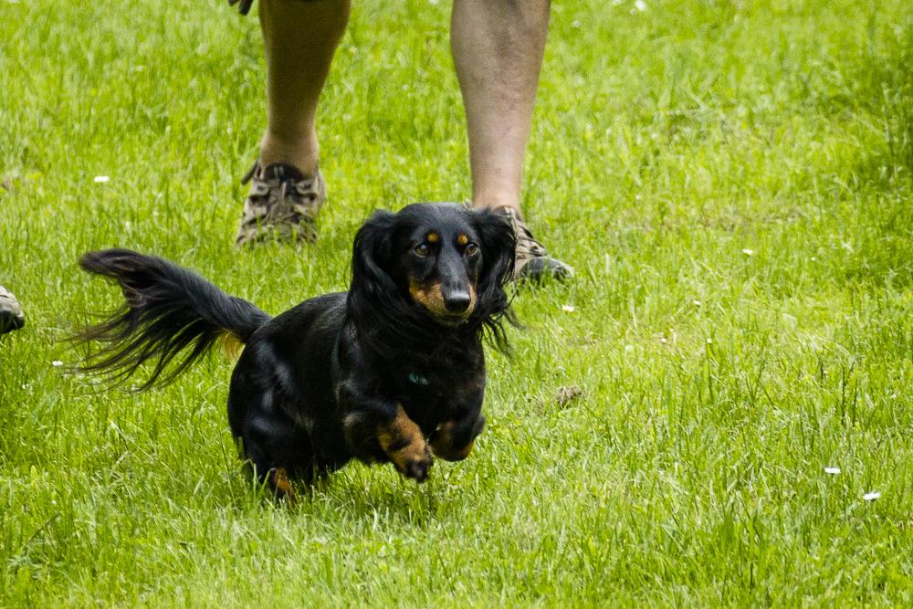 Tag-des-Hundes-2016-21