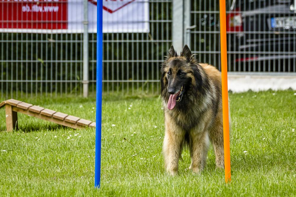 Tag-des-Hundes-2016-29