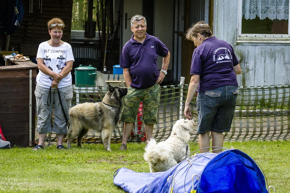 Tag-des-Hundes-2016-32