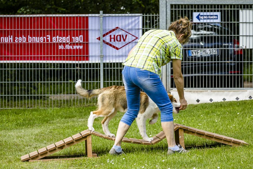 Tag-des-Hundes-2016-36