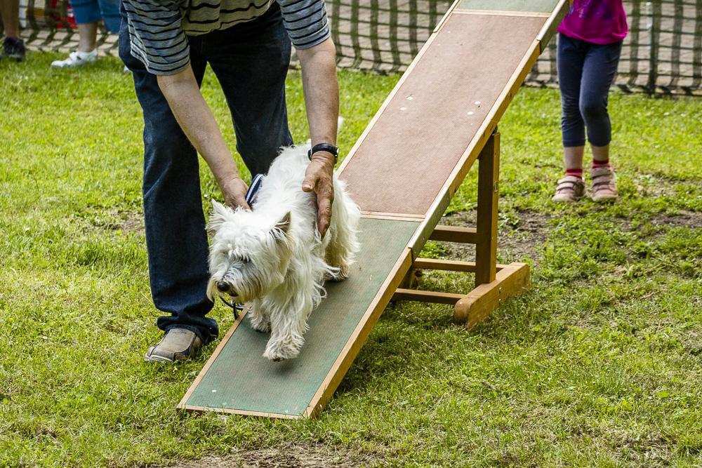 Tag-des-Hundes-2016-44