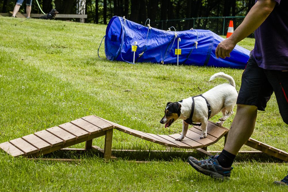 Tag-des-Hundes-2016-48