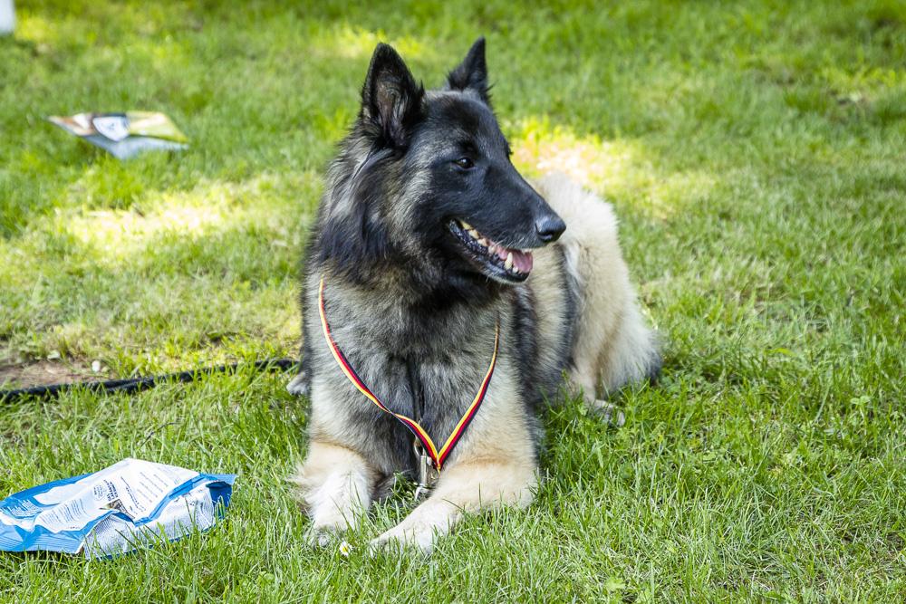 Tag-des-Hundes-2016-61