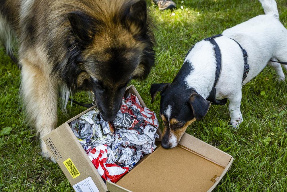 Tag-des-Hundes-2016-65