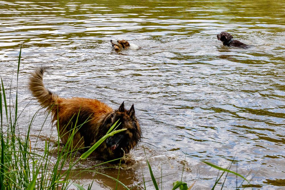 Tag-des-Hundes-2017-011