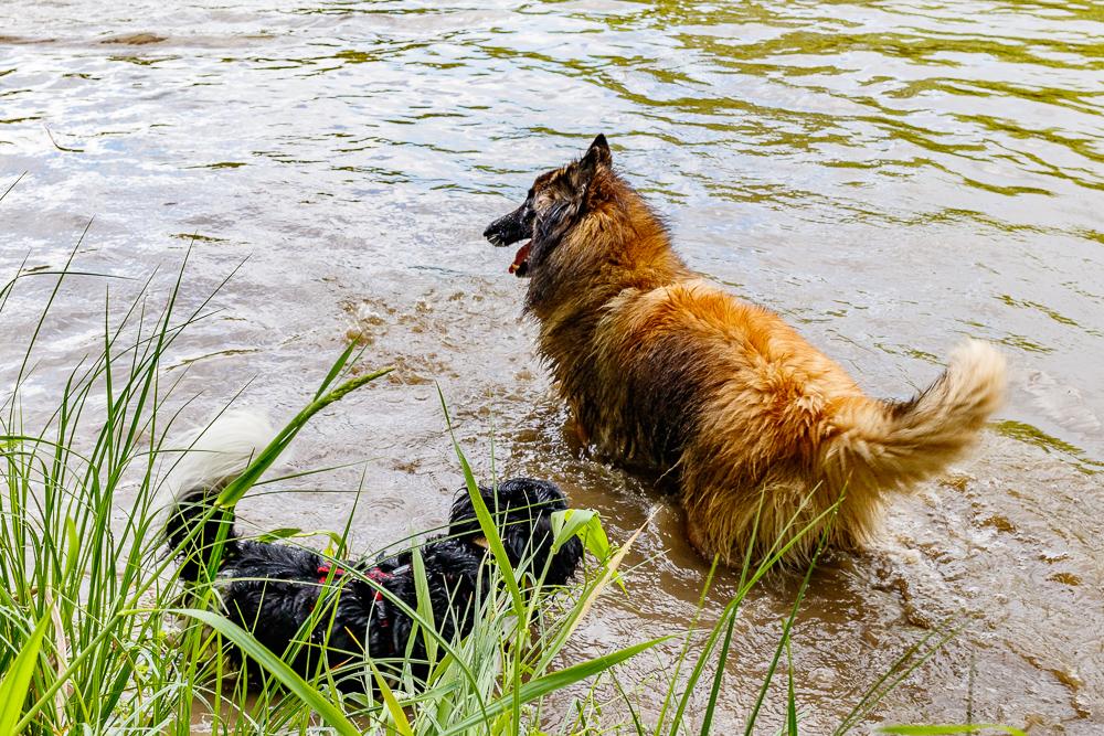 Tag-des-Hundes-2017-012