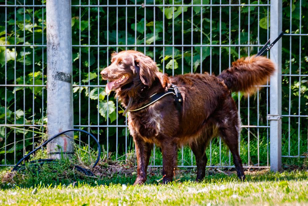 Tag-des-Hundes-2017-034