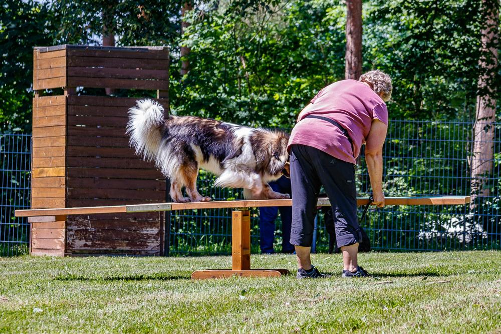 Tag-des-Hundes-2017-037