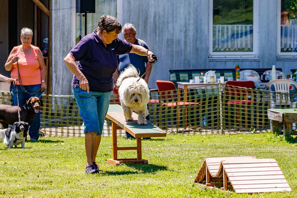 Tag-des-Hundes-2017-058