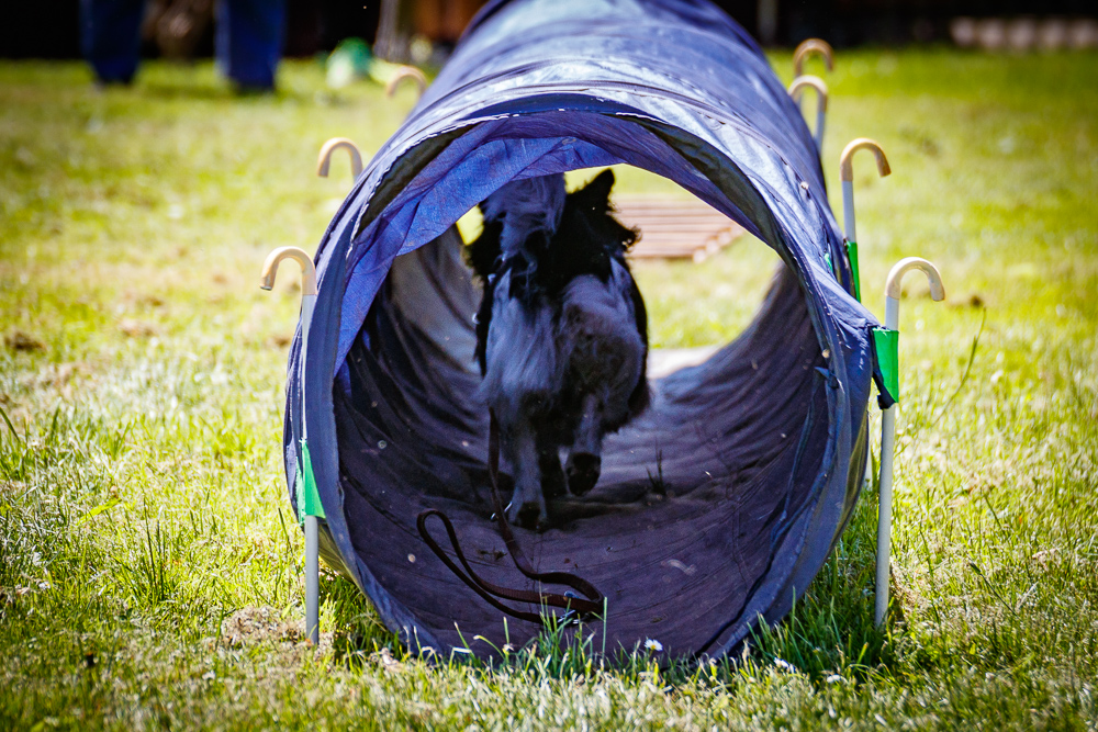 Tag-des-Hundes-2017-066