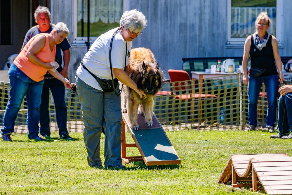 Tag-des-Hundes-2017-073
