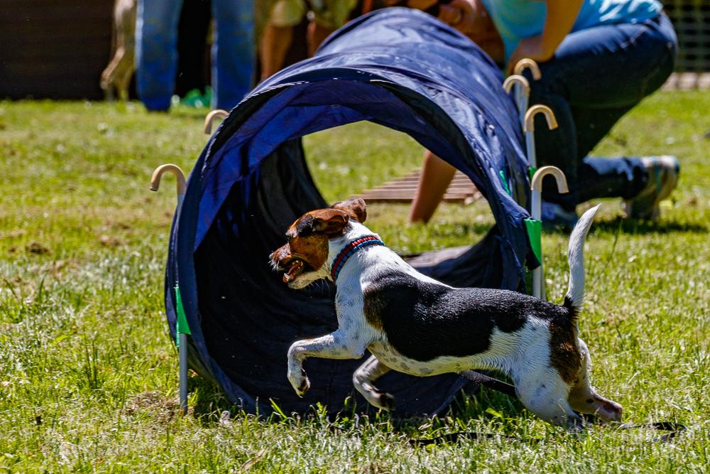 Tag-des-Hundes-2017-081