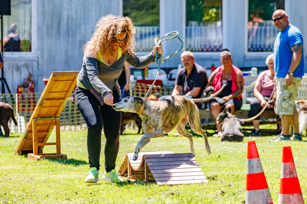 Tag-des-Hundes-2017-084