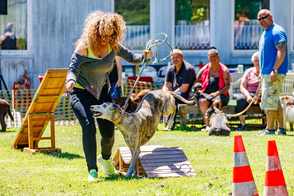 Tag-des-Hundes-2017-085