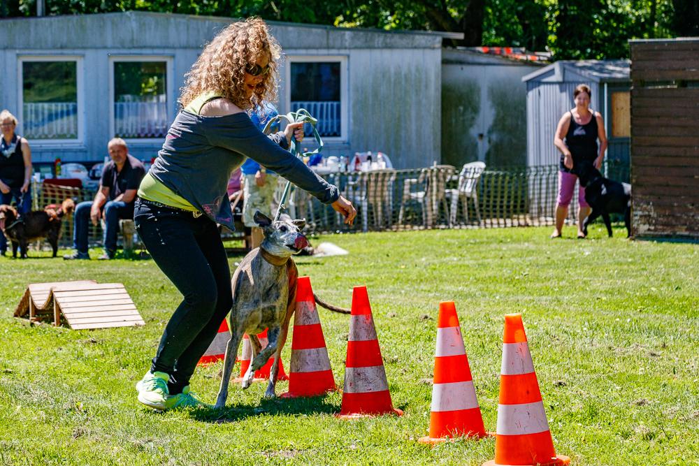 Tag-des-Hundes-2017-086