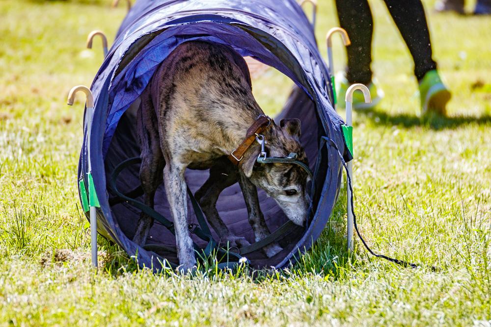 Tag-des-Hundes-2017-089