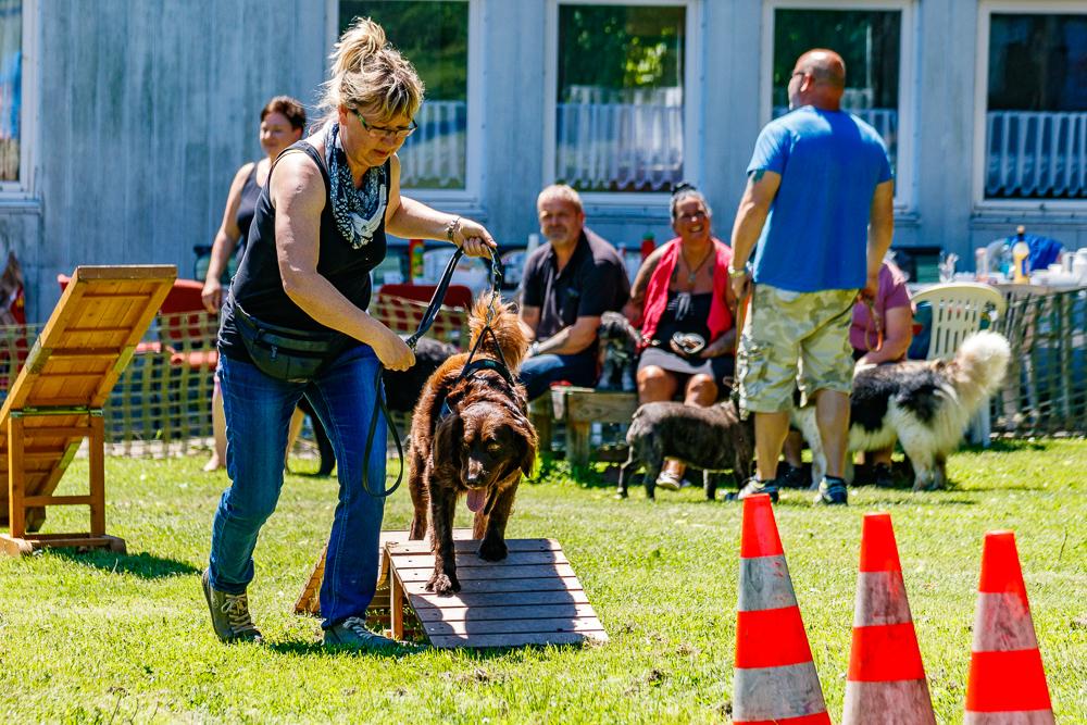 Tag-des-Hundes-2017-091