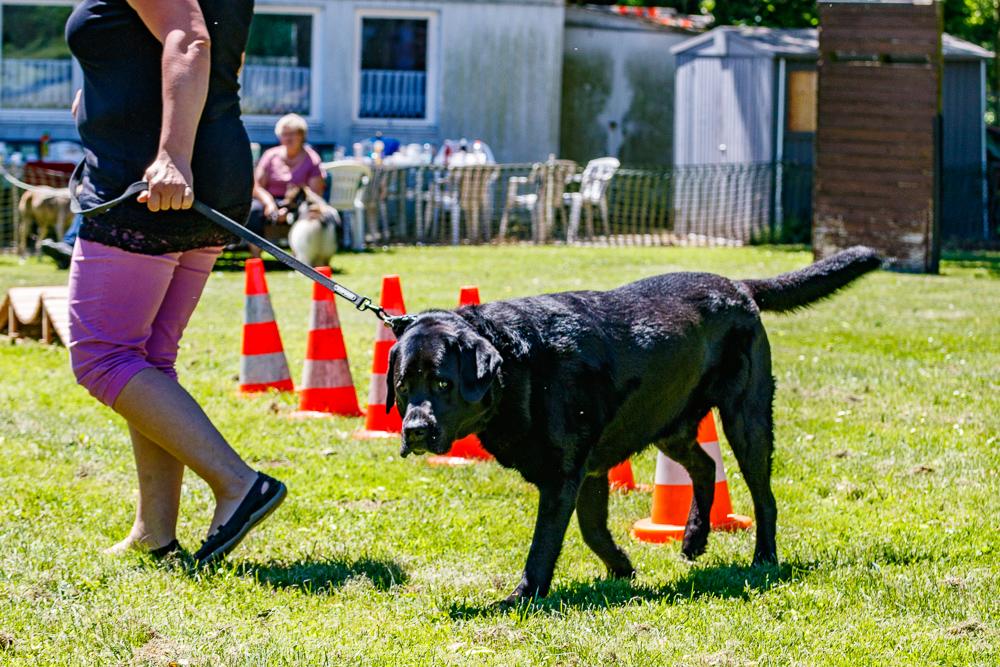 Tag-des-Hundes-2017-097