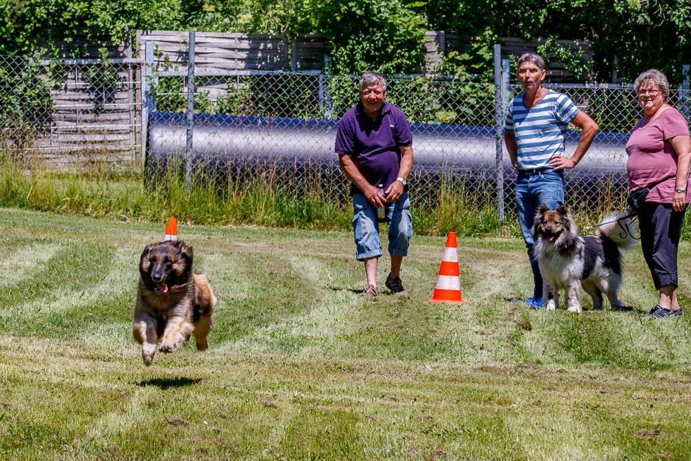 Tag-des-Hundes-2017-104