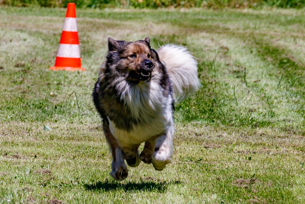 Tag-des-Hundes-2017-107