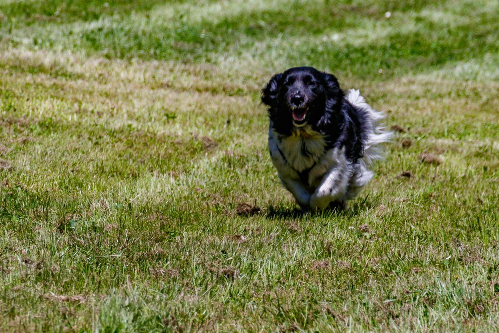 Tag-des-Hundes-2017-109