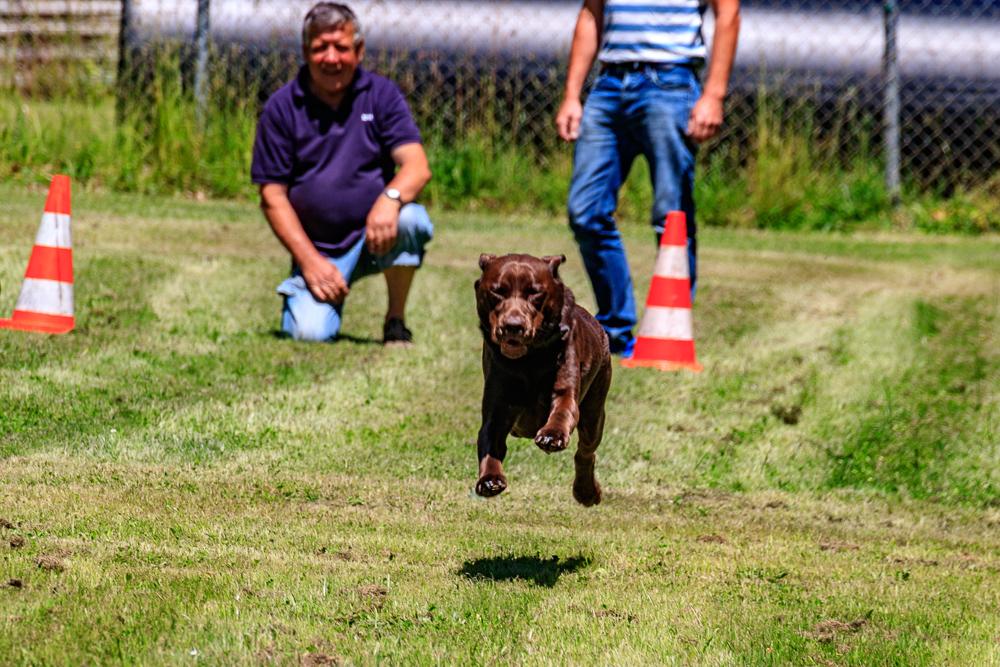 Tag-des-Hundes-2017-113