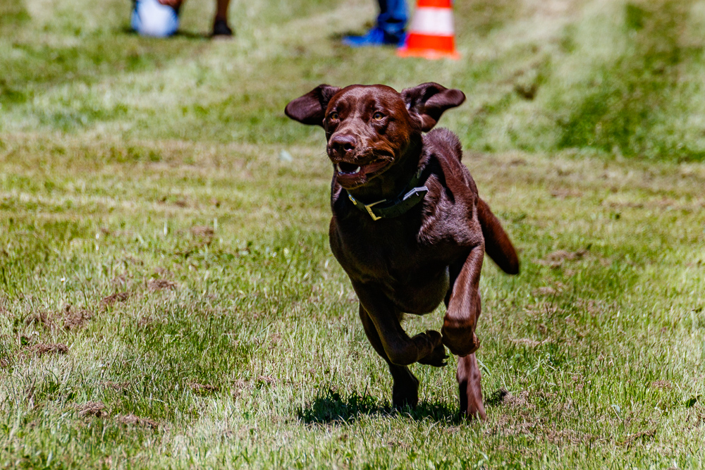 Tag-des-Hundes-2017-115