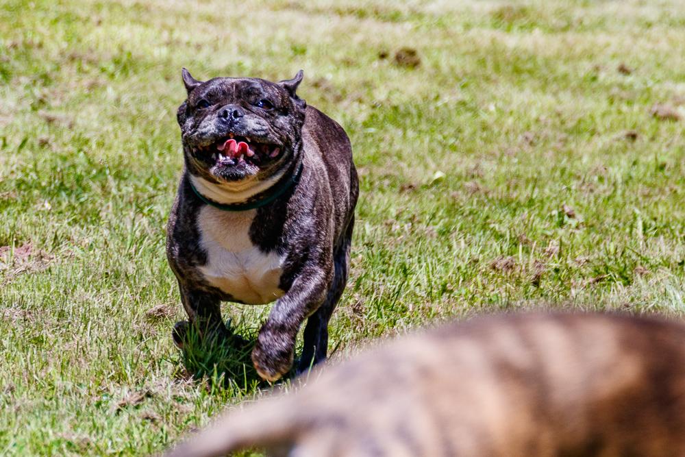 Tag-des-Hundes-2017-131