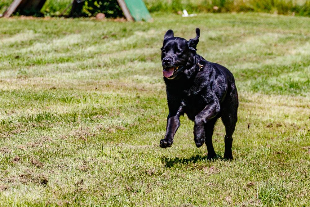 Tag-des-Hundes-2017-135