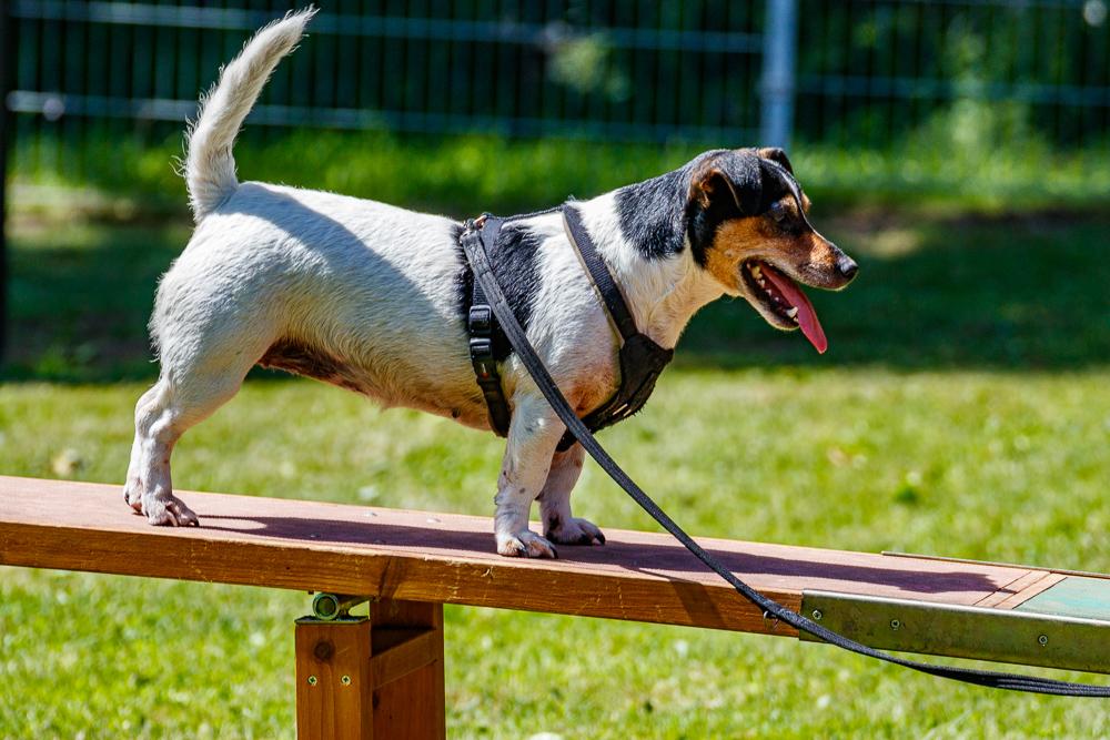 Tag-des-Hundes-2017-143