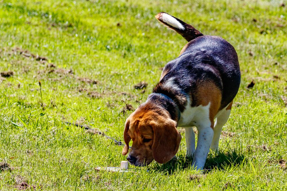 Tag-des-Hundes-2017-157