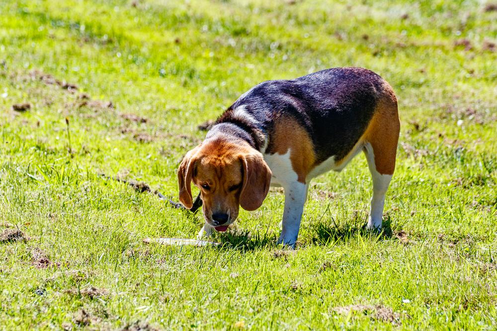 Tag-des-Hundes-2017-158