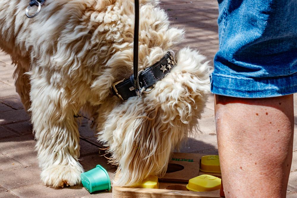 Tag-des-Hundes-2017-172