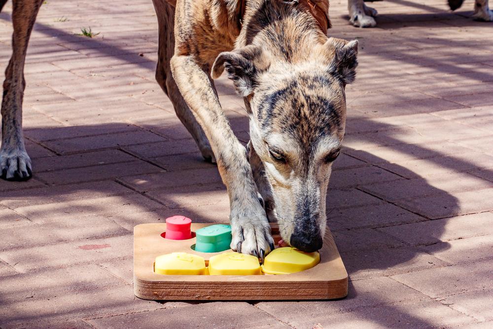 Tag-des-Hundes-2017-175