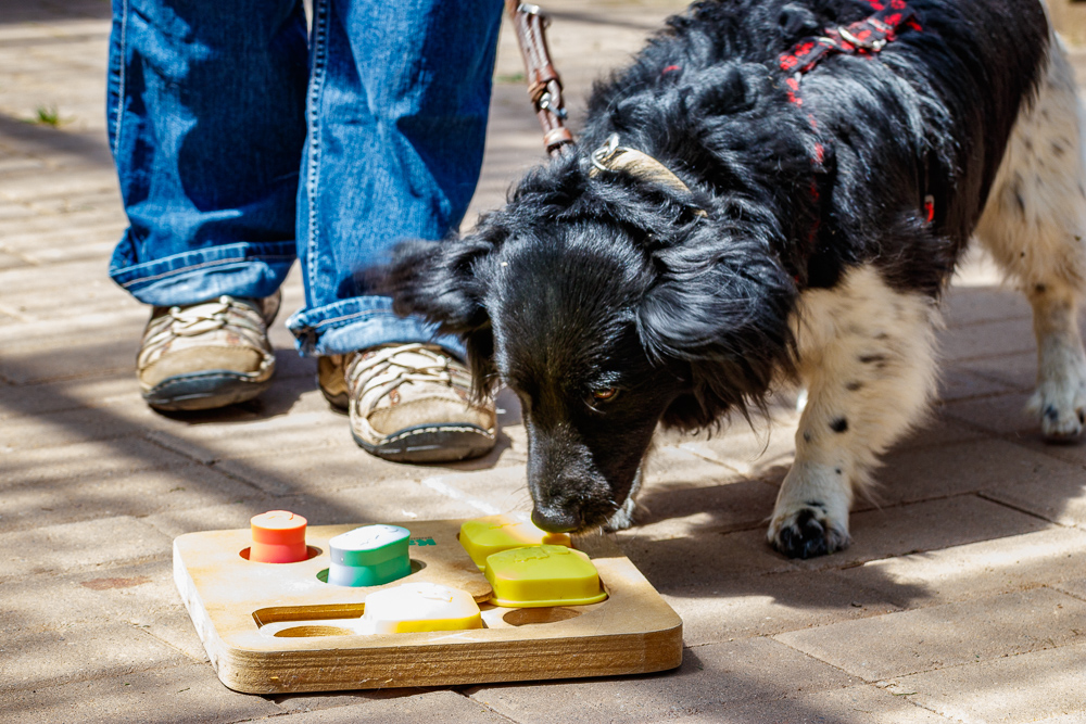 Tag-des-Hundes-2017-179