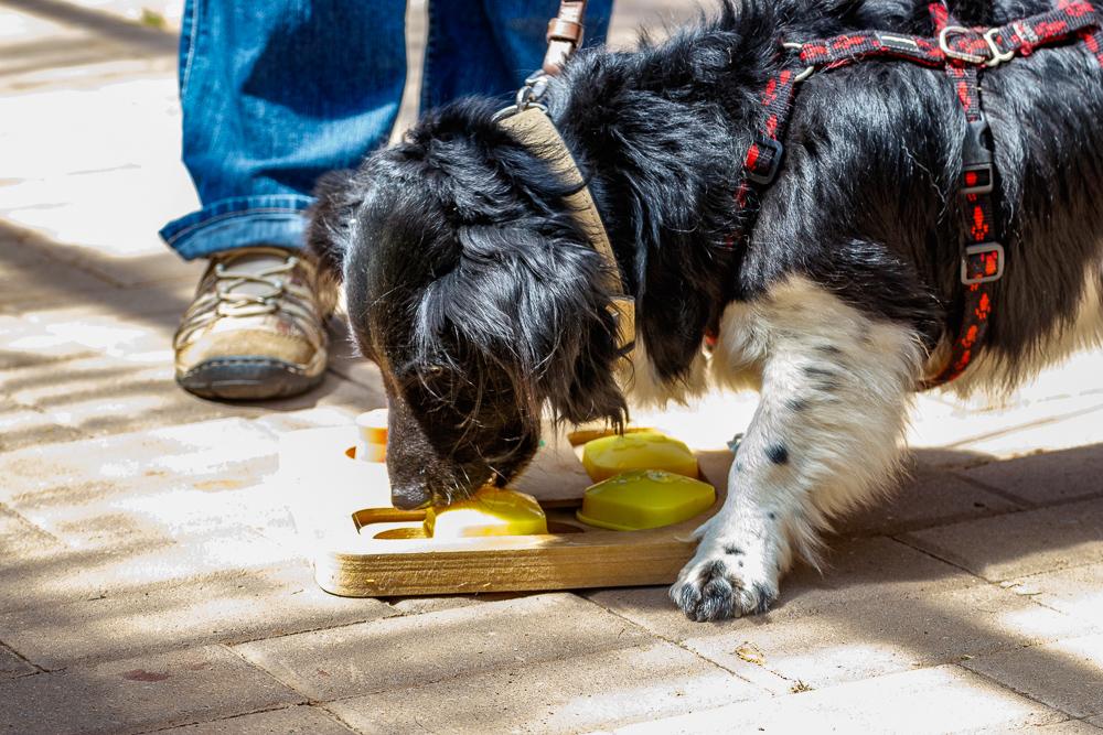 Tag-des-Hundes-2017-180