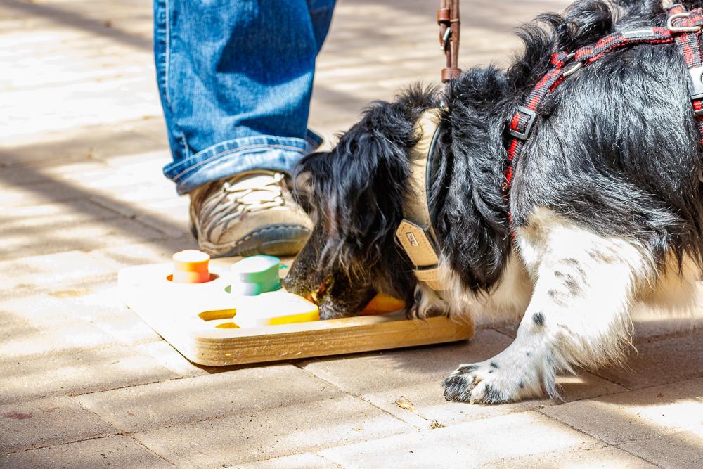 Tag-des-Hundes-2017-181