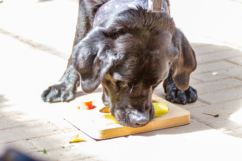 Tag-des-Hundes-2017-192